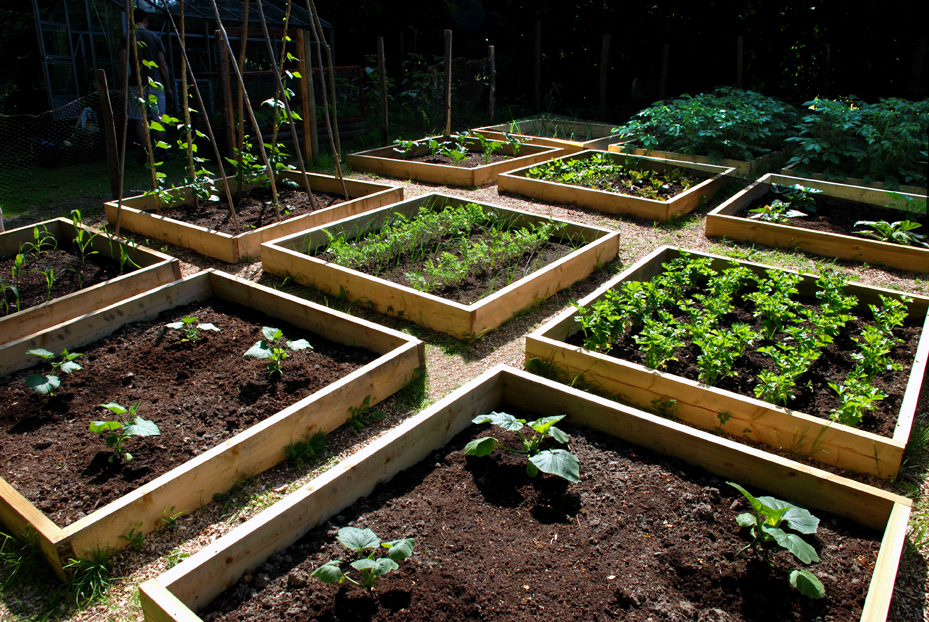 time to gear up your fall veggie garden real estate and