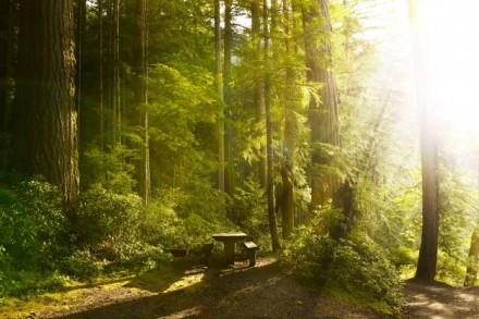 sunny-rainforest_1426-642